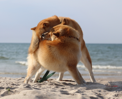 zabawa na plazy